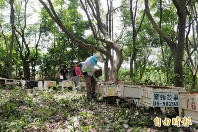 蜜蜂消失 蜂農免費提供「百萬雄兵」協助絲瓜農