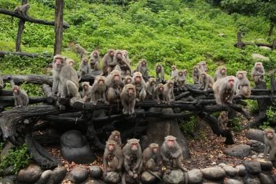 生產季尾聲 大坑成群猴寶寶依偎媽媽超萌