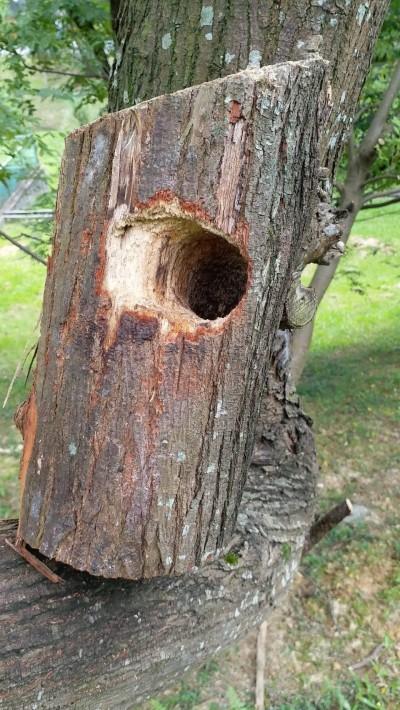南港公園五色鳥築巢樹木 遭公然鋸斷