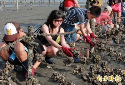 快來搶報名!王功漁火節今年首度推出免費「百米烤蚵廊道」
