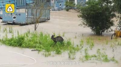 中國南部暴雨開啟看海模式!機場淹成野生動物園