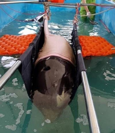 悲哉!鯨豚、海龜在台灣 3個月死了逾百隻