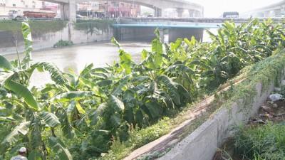 前後任縣長「互打」? 王惠美砍了魏明谷的香蕉!