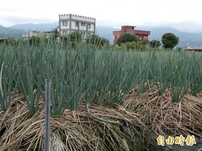 颱風未到菜價先動 青蔥漲幅逾5成