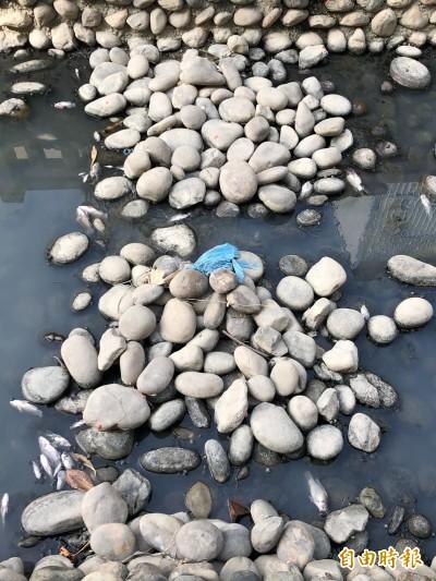 高雄鳳山溪今再傳死魚 環保局評估管制方案