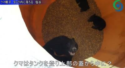 玉米吃到飽? 黑熊家族落入「食物深淵」 驚覺是飼料桶