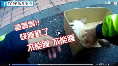 沙鹿暖警搶救遭撞小黃狗 一句「不能睡」網友大呼催淚