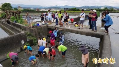 后溪底區域排水生態探索 小朋友下水驚見台灣石鮒