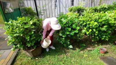本土登革熱嚴峻 台南戶內外查獲206容器養孑孓 依法開罰