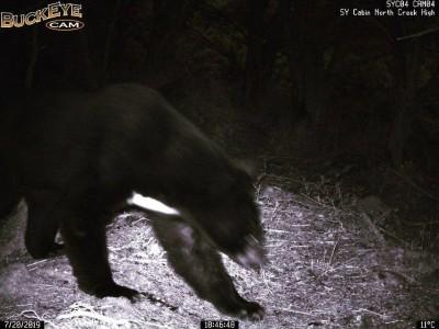 黑熊警報!嘉明湖向陽山屋黑熊預警系統20日首次響起