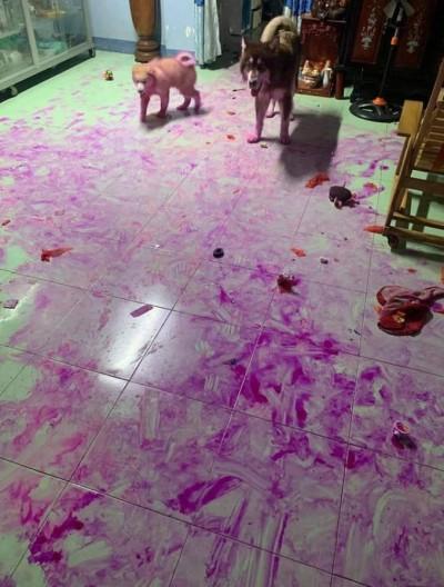 崩潰!回家驚見地板整片紫 兇手竟裝萌賣傻