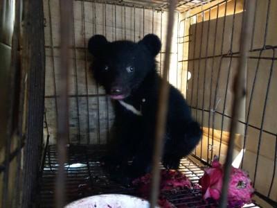 黑熊寶寶迷路被狗追 飽受驚嚇萌樣令人心疼