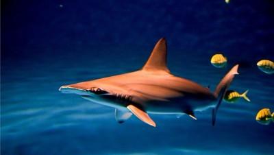 鯊魚利牙變身可愛文創品 海生館顛覆恐怖形象