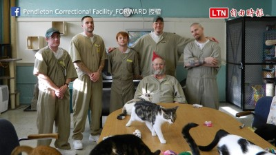 把監獄變成貓咪收容所! 受刑人不只變貓奴眼神還超有愛......