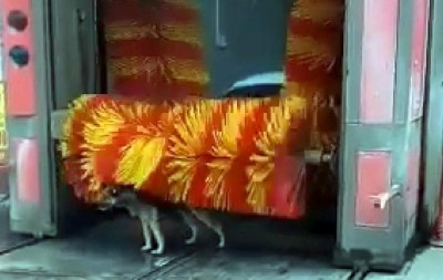 洗車機這樣用... 聰明狗狗消暑有創意