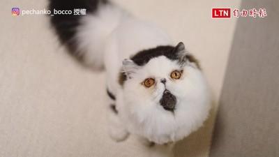 彷彿正逃離好萊塢式爆炸! 這隻貓笑翻網友:想要一套牠的表情包