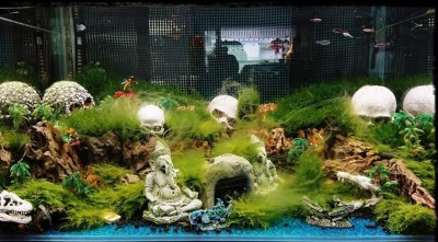 驚!鬼月應景魚缸太逼真 嚇得太太想請道士到家中