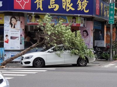 颱風天違停!賓士遭「大自然懲罰」 網友笑:好療癒!