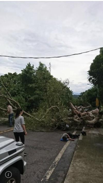 北市仰德大道路樹突倒塌 男騎士遭壓傷送醫