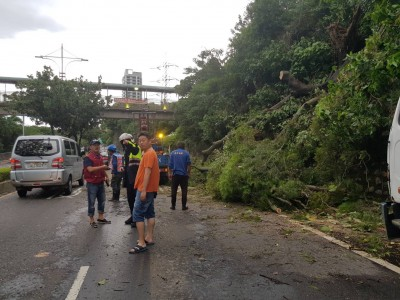 路樹遭「利奇馬」攔腰折斷 警消搬樹還路於民