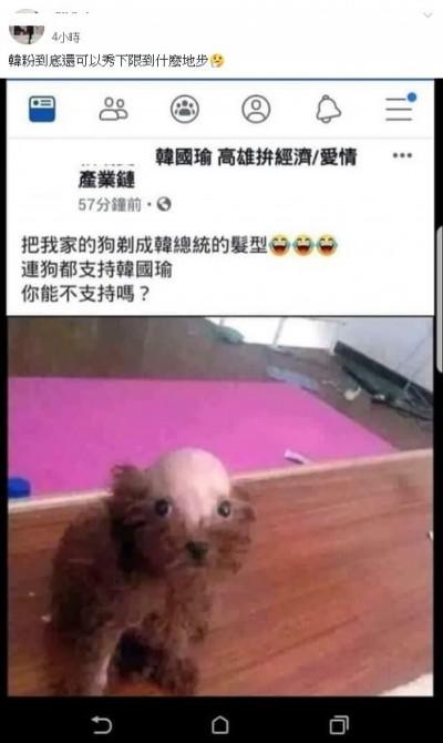 韓粉社團PO照笑稱「把我家狗剃成韓總髮型」 網友爆怒