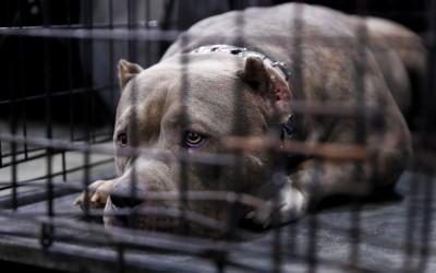 遭3隻比特犬圍攻 16歲少年慘被咬死