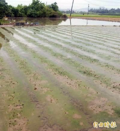 豪雨重創蔬菜專區  高雄菜價比去年同期漲1成6