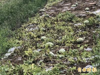 彰化暴雨成災!西瓜、洋蔥田泡水「去了了」