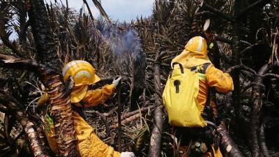 陸空大搶救 綠島防風林大火熄滅了