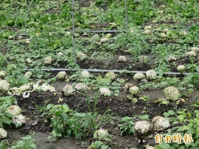 全國最嚴重... 高雄農損增至近2200萬元