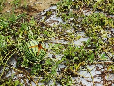 812豪雨農損台南列救助地區 8/21起受理申請