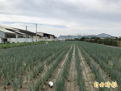 高雄菜價持續上漲 青蔥零售每公斤近138元