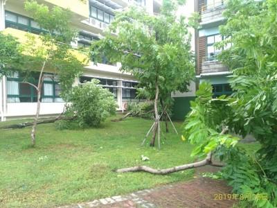 掃到颱風尾 南市14校災損樹倒為主