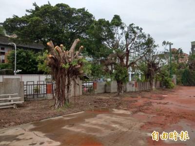韓國瑜力拚哈瑪星觀光 愛樹人怒批毀榕林蓋停車場