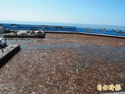 一夜之間...漂流木塞爆富岡漁港 交通船卡在港內