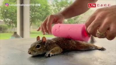 松鼠也懂得享受spa! 牠超黏人而且還喜歡和主人共舞