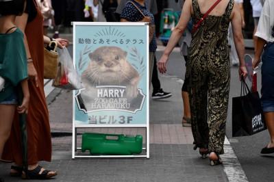 華盛頓公約將禁水獺國際交易 日本反對