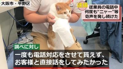 日本貓咪涉嫌騷擾 「被捕」時神色黯然「不喵一語」