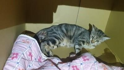 澳花派出所傳喜訊!「小美女」產下5隻小貓 喵聲不斷好熱鬧