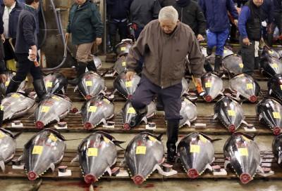 不夠吃? 日本提議增加太平洋黑鮪捕撈配額