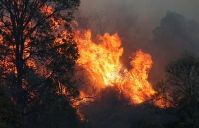 澳洲東岸森林大火!百場火災燒毀21棟房