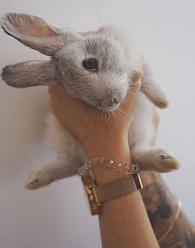 諷刺!素食主義者救出16隻兔子 但也害死了近100隻...