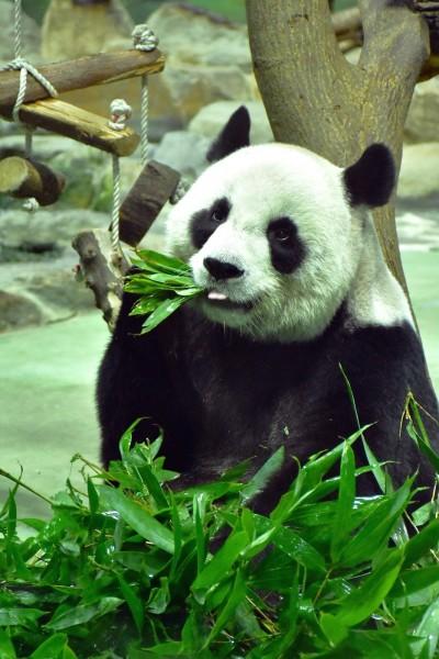 動物柚子吃多傷身 北市動物園推中秋特製菜單