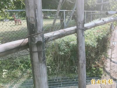 雜草中藏陷阱 未清理鷹架鐵絲割傷民眾