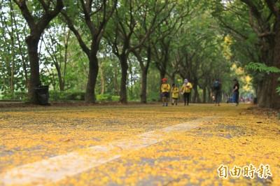 「黃金地毯」季節限定!「神帽廟」附近台灣欒樹秘境超美