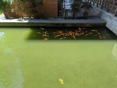 怕熱?魚魚躲陰影避暑 網笑喊:怕變成「魚湯」
