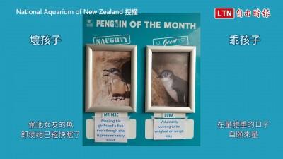 水族館「乖企鵝與壞企鵝」公佈欄 網友笑爛:是每月八點檔連載嗎?