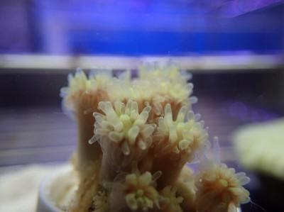 全球暖化衝擊海洋生態 新研究發現:珊瑚的希望在台灣
