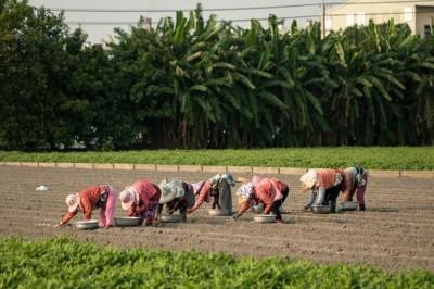美!雲林鄉間田野農婦「種蒜」 網讚嘆:台灣版《拾穗》