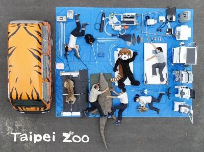 動物園行動診療所開箱!保育員抱緊鱷魚超吸睛